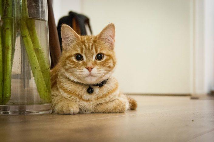 Взять кота на время отпуска